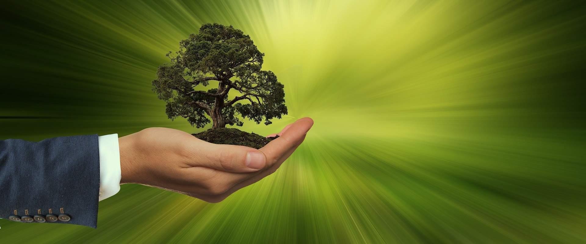 Устойчивое развитие CC